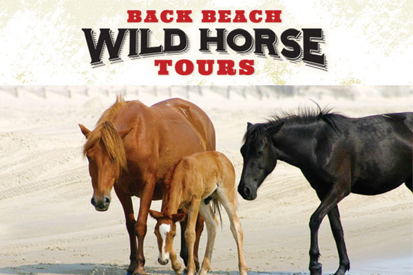 Back Beach Wild Horse Tours Corolla NC